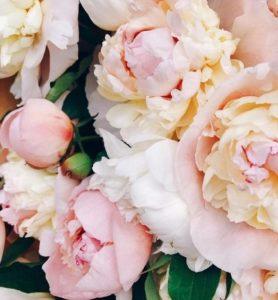 Pink Rose Flower Bathing